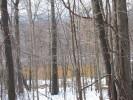 Deerfield_22.12.04_4605.jpg 2