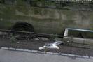 Edinburgh_22.06.07_5677.jpg 3