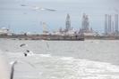 Galveston-TX_01.01.20_8364.jpg