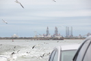Galveston-TX_01.01.20_8367.jpg