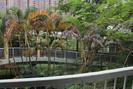Hong_Kong_17.07.13_6149.jpg